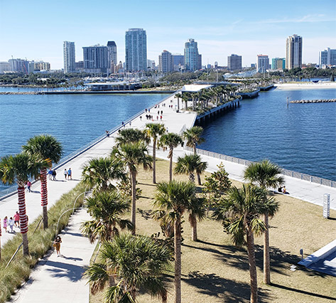 palm trees in St. Petersburg Florida