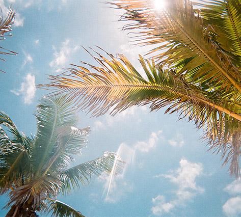 Palm trees in Ocala Florida